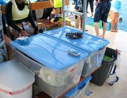ホリデイアロハ ハワイ スタッフのブログ-dolphin02