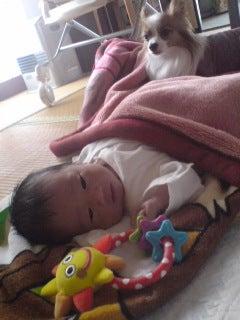 ★Riku-BLOG★我が家のお犬様*親ばか日記-20090604132110.jpg