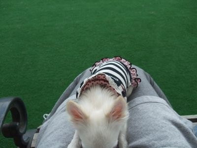 愛犬と気ままな生活