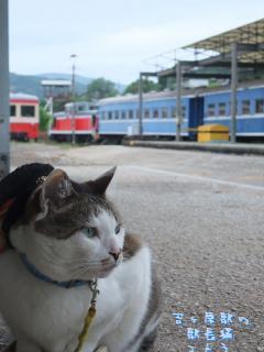 駅長猫コトラの独り言~旧 片上鉄道 吉ヶ原駅勤務~-待ち受け3