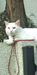 *・*・* Sola★日記 *・*・*-20090613163715.jpg