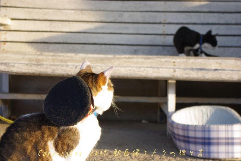 駅長猫コトラの独り言~旧 片上鉄道 吉ヶ原駅勤務~-ホトフを見つめるコトラ