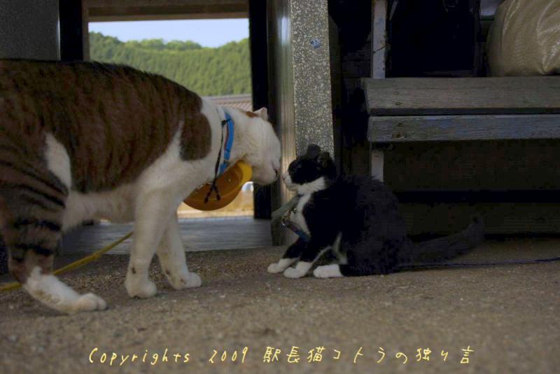 駅長猫コトラの独り言~旧 片上鉄道 吉ヶ原駅勤務~-ごあいさつの駅長猫たち