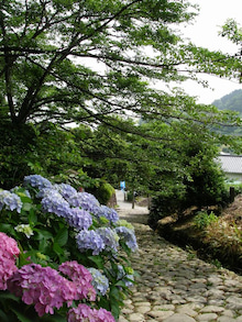 ビビのブログ-金谷宿の石畳