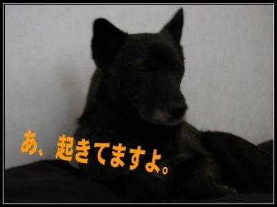 元捨て犬 「オヤジたちの毎日」
