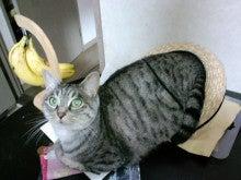 スス♀+ぶー♂ログ ~黒猫とアメショMIX+その下僕~ -CA3C00590001.jpg
