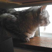 窓辺の梨雪