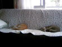 はるちゃんとお昼寝☆