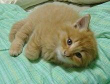 ★bettyのグルメな猫ブログ★