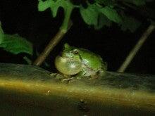 ぽれぽれカエルが雨に鳴く-09062101