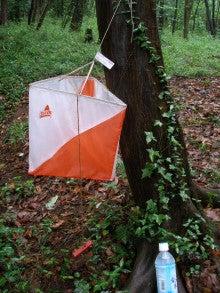 ぽれぽれカエルが雨に鳴く-09062106
