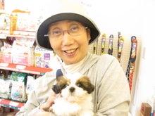 ペットショップ プチマリア 金沢店日記-橋本シーズー