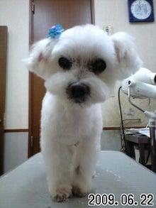 ペキニーズ専門犬舎 TETSU BOCCURI JP、ペットハウス ミルミル-090622_1100~0001.jpg