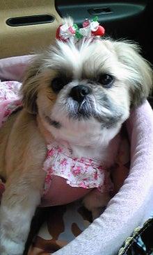 飼育放棄犬シーズー春香が教えてくれた、幸せな気持ちになる方法-090620_1523~02.jpg
