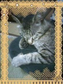 *癒しの愛犬OR愛猫*-090620_1736~0001.jpg
