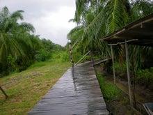 夫婦世界旅行-妻編-雨の小道