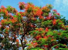 小笠原父島エコツアー情報    エコツーリズムの島        小笠原の旅情報と父島の自然-6.24