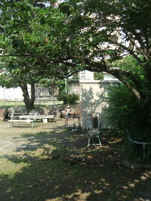 ブレッド&サーカス・ブログ-公園1