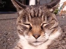 猫日和 -neko biroyi-