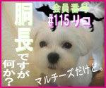 駄犬ぐっちゃん賢犬カレン-胴長同盟#115