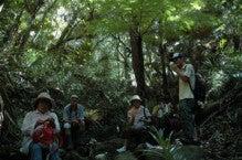 小笠原父島エコツアー情報    エコツーリズムの島        小笠原の旅情報と父島の自然-6.28