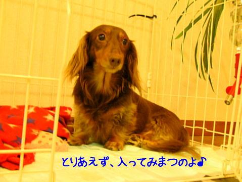 hamonics*ぷらす-lotta02