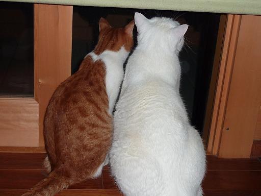 一猫一会5