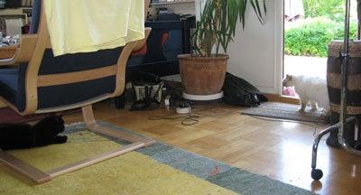 北欧からコンニチワ-白い猫ー3