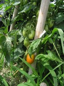 週末農夫のおいしい野菜づくり