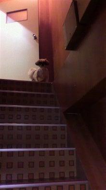 環境にやさしいシャンプー「ソイウォッシュfor PET」-階段