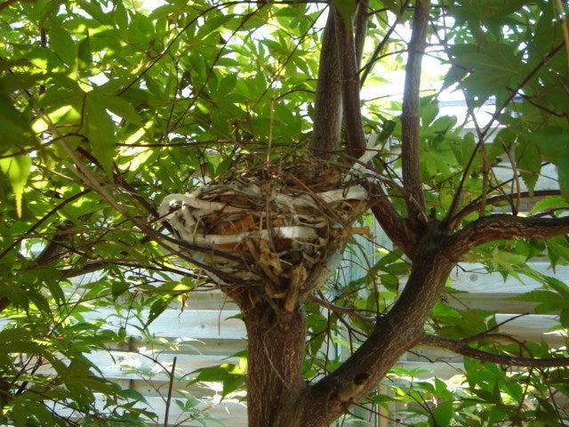 庭の鳥の巣箱に、鳥がぜんぜん住んでくれません。 …