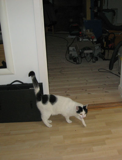 北欧からコンニチワ-ロッティの猫