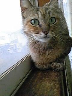 猫バカ日和
