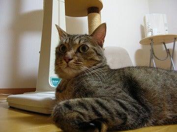 にゃんこらぼ。 -名古屋で手づくり猫ごはん--rapi