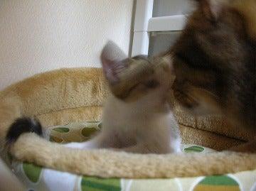 にゃんこらぼ。 -名古屋で手づくり猫ごはん--ochibi