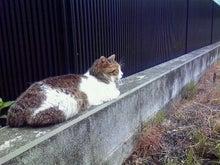 臣の野良猫仕事日記-200907091119000.jpg