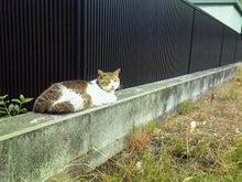 臣の野良猫仕事日記-200907091118000.jpg