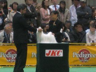 ★ろくたんブログ★ ヨーキーとチワワとよきぇ-2009-4-5