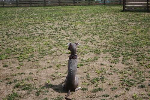 タマネギのブログ