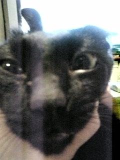 【大田区】猫を虐待死か、30代男を逮捕へ->画像>54枚