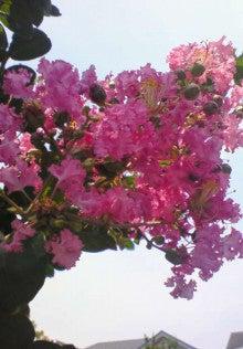 花ログ2009-NEC_0121.jpg
