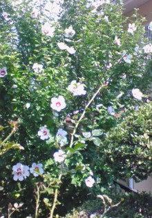花ログ2009-NEC_0124.jpg