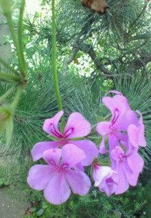 花ログ2009-NEC_0115.jpg