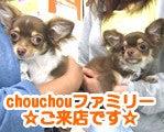 chouchouファミリーのブログ