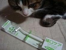 びびん☆こゆっきー ときどき音楽-歯ブラシ