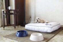 N-1tour旅行記-愛犬と行くグアム旅行現地滞在編その3