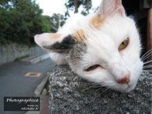 Photographica-cat02