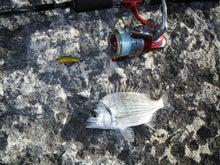 沖縄から遊漁船「アユナ丸」-釣果(21.07.20)