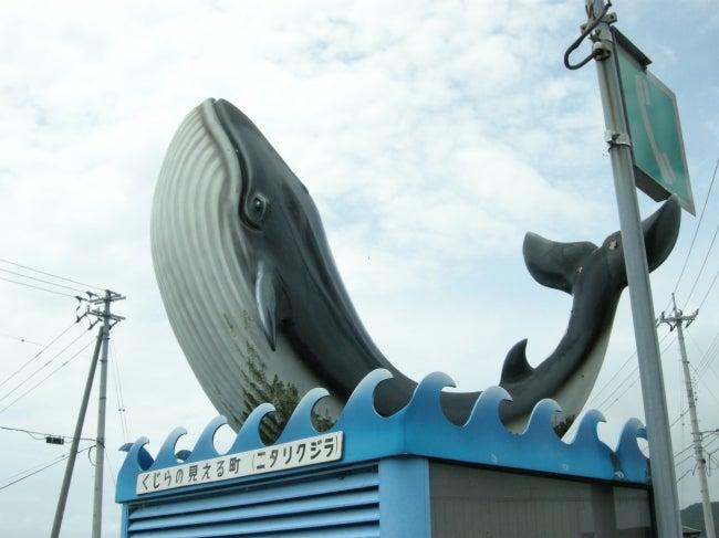 いろりや9640ブログ~高知県黒潮町LOVEな毎日をお届け~-黒潮町はホエールウォッチングのまちです