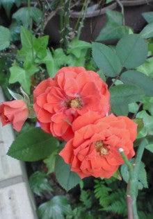 花ログ2009-NEC_0114.jpg